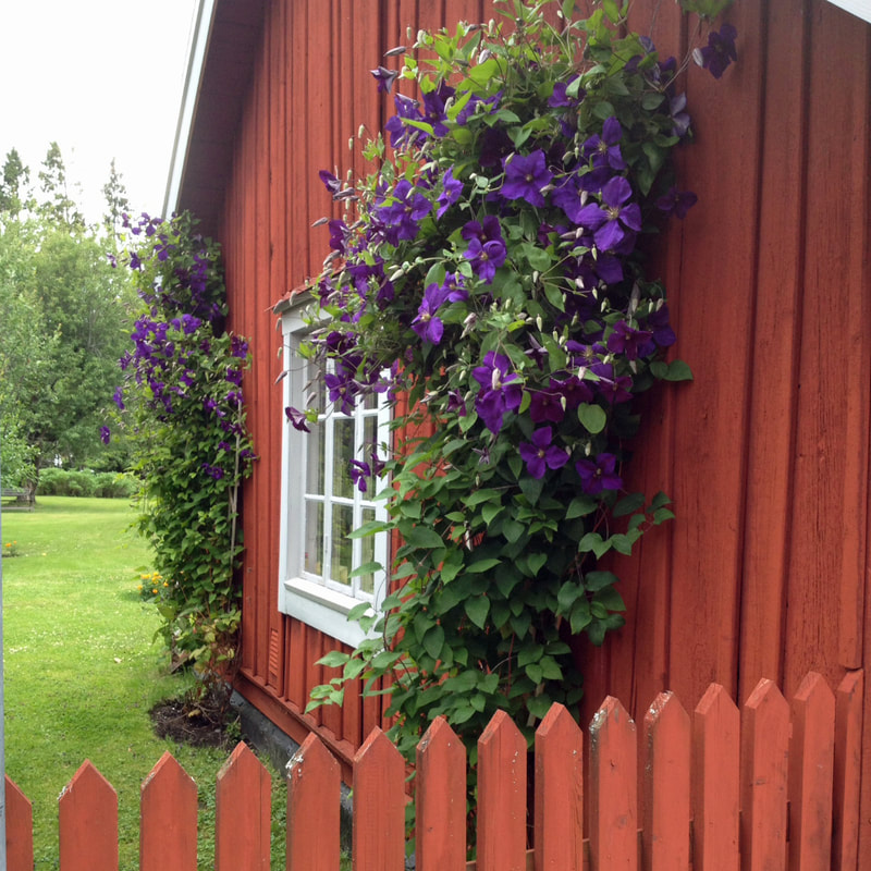 A simple but stunning swedish cottage with vines